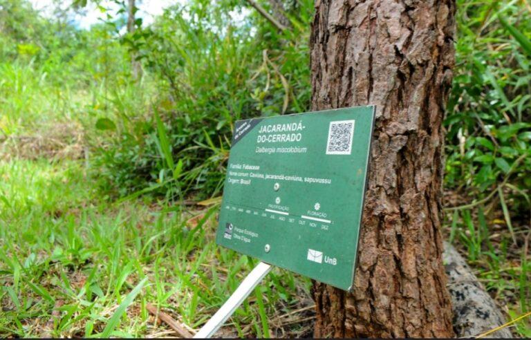 100 mil árvores nativas plantadas