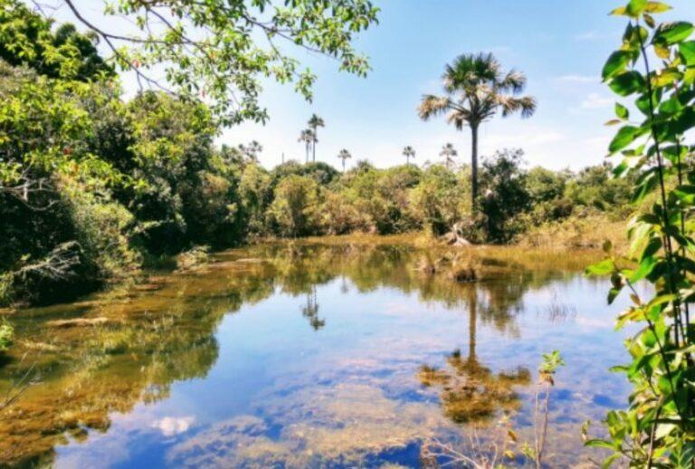 GDF cumpre meta de revitalização da Bacia do Alto Rio Descoberto